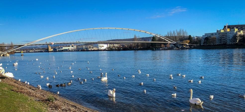Die Dreiländerbrücke in Huningue führt uns auf unserer Radwanderung Rhone-Basel über den Rhein. (#1)