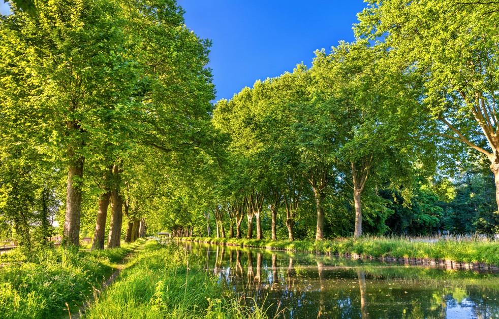 Der Rhein-Rhone-Kanal ist auf weiten Strecken der Radwanderung Rhone-Basel von Alleen gesäumt, wie hier kurz hinter Straßbourg. (#3)